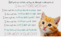 <3: Before Yoo take me home please understand  Iom a FOREVER Cat  I amnot an until you have a baby Cat  Iam not on ntilYou get a dog Cat  I am not on uhtiyou get bored Cat  I am not an uhtil You move cat  am not an Unit! get old cat  f You Cannot promibe me forever  工AMNOT. Y OL.ROAT. <3