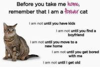 Bored, Memes, and Home: Before you take me home,  remember that I am a ower cat  I am not until you have kids  I am not until you find a  boyfriend  I am not until you move to a  new home  I am not until you get bored  with me  I am not until I get old