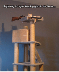 Guns, Regret, and House: Beginning to regret keeping guns in the house <p>He Got Tired Of The Red Dot.</p>