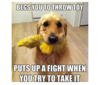 Begs you to throw it... #meme #funny #hilarious #dog: BEGS YOUTOTHROW TOY  PUTS UP A FIGHT WHEN  YOU TRY TO TAKE IT Begs you to throw it... #meme #funny #hilarious #dog
