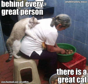 Facebook, Memes, and facebook.com: behind every  great person  cataddictsanony-mouse  there is a  great cat  www.facebook.com/cat.addicts