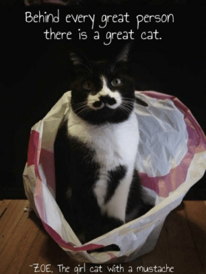 Memes, 🤖, and Cat: Behind every great person  there is 'a great cat.  ZOE, The qirl cat with a mustache