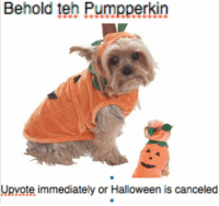 Spook spook: Behold Pumpperkin  teh Upyote immediately or Halloween is canceled Spook spook
