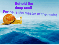 Moist, Deep, and The Master: Behold the  deep snail  For he is the master of the moist