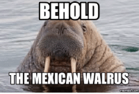 walrus: BEHOLD  THE MEXICAN WALRUS  memes Commu