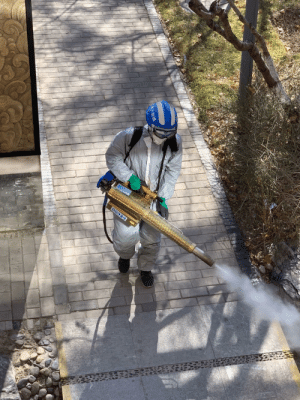 Beijing is fumigating the streets to contain COVID-19, killing birds and stray cats in the process: Beijing is fumigating the streets to contain COVID-19, killing birds and stray cats in the process