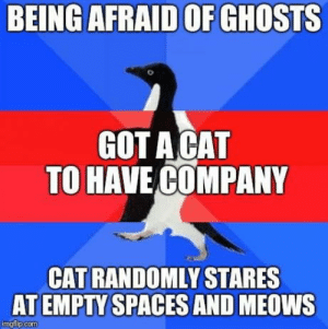 Got, Spaces, and Cat: BEING AFRAID OF GHOSTS  GOT ACAT  TO HAVE COMPANY  CAT RANDOMLY STARES  AT EMPTY SPACES AND MEOWS It freaks me out