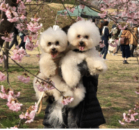 9gag, Memes, and Happy: Being carried by mama vs being carried by papa - 📷 loan___er | TW - happy spring blossom 9gag