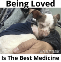 "Barney, Memes, and Prayer: Being Loved  HAPLACETOBARK  Is The Best Medicine Prayers for ""Barney"" This is the hardest part of rescue. Fighting for their lives, health & well being, after years of neglect & cruelty have taken their toll on their bodies.  This sweet boy only wants to Love Everyone💕 He continues to fight & everytime I think it's time to let him go, he tells me, he's not ready yet. A true fighter in every sense of the word. I'll write more in length, later this week after more test results are back & I have more time to write. For now, I'm asking for all the love & well wishes in the world for him. It's a super busy day & please know, I truly wish I had more time to write... Blessings & Love to you all❤️  #everylifematters #aplacetobark #faithhopeandlove #miracles"