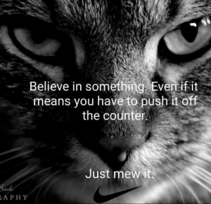 The Counter: Believe in something. Eventif it  means you have to push it off  the counter  Just mewit  APHY
