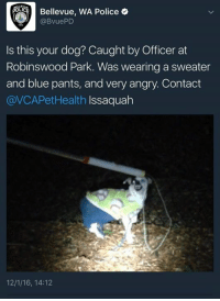 bellevue: Bellevue, wA Police e  @BvuePD  Is this your dog? Caught by Officer at  Robinswood Park. Was wearing a sweater  and blue pants, and very angry. Contact  @VCAPet Health  Issaquah  12/1/16, 14:12