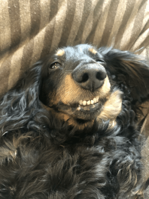 Belly rubs bring out all of the derp in my little guy: Belly rubs bring out all of the derp in my little guy