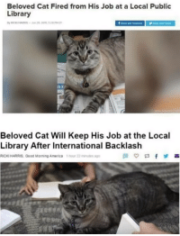 Backlash: Beloved Cat Fired from His Job at a Local Public  Library  ROCKI HARRIS-n 22016 528PME  here wth fecebook  an  Beloved Cat Will Keep His Job at the Local  Library After International Backlash  RICKI HARRIS, Good Morning America 1 hour 22 minules ago