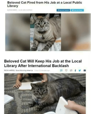 America, Good Morning, and Good: Beloved Cat Fired from His Job at a Local Public  Library  B.i  Beloved Cat Will Keep His Job at the Local  Library After International Backlash  RICKI HARRIS, Good Morning America hour 22 mius ago You did good people