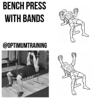 Comfortable, Head, and Memes: BENCH PRESS  WITH BANDS  OOPTIMUMTRAINING BENCH PRESS WITH BANDS Main Muscle: Chest Secondary Muscle: Triceps, Delts Exercise Type: Push, Compound Equipment Required: Bench, Bands This version of the bench press uses bands instead of weights in order to hit your chest muscles in a different way. Because the bands keep increasing resistance as you push higher the stimulation offered is different from your standard dumbbell or barbell bench press. Instructions: 1️⃣ Securely fasten the band under the leg of a flat bench, near your head. 2️⃣ Lie flat on the bench with your feet flat on the floor in order to stabilize your movements. 3️⃣ Grasp one end of the band in each hand and starting with your hands at chest level. 4️⃣ Press upwards so your arms are fully extended. The width of your hands at the top of the press can be wide or narrow depending on how you are more comfortable and what part of your chest you wish to focus on. 5️⃣ With a slow controlled motion return to starting position. Tips: 1️⃣ It should take about twice as long on the positive (going up) part of the exercise as the negative (going down). 2️⃣ Make sure you are in full control throughout the exercise and concentrate on really squeezing your pecs in order to isolate them. 3️⃣ You can also try attaching bands to a barbell or dumbbells if you want to mix it up.