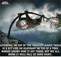 Tag a Liverpool FC fan... 😂: BENCH  WARMERS  LIVERPOOL ON TOP OF THE PREMIER LEAGUE TABLE  IS A BIT LIKE AN ELEPHANT ON TOP OF A TREE.  NOBODY KNOWS HOW IT GOT THERE, BUT WE ALL  KNOW IT WILL FALL AT SOME POINT Tag a Liverpool FC fan... 😂