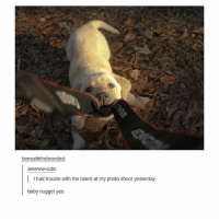 Memes, 🤖, and Photos: beneaththebranded:  awwww-cute:  I l had trouble with the talent at my photo shoot yesterday  baby nugget yes nOM - Max textpost textposts
