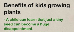 Kids, Irl, and Me IRL: Benefits of kids growing  plants  A child can learn that just a tiny  seed can become a huge  disappointment. Me irl