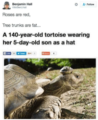 "<p>Tortoise Shell Hat. via /r/memes <a href=""https://ift.tt/2sleKyx"">https://ift.tt/2sleKyx</a></p>: Benjamin Hall  @MrBenLHall  Follow  Roses are red,  Tree trunks are fat.  A 140-year-old tortoise wearing  er 5-day-old son as a hat <p>Tortoise Shell Hat. via /r/memes <a href=""https://ift.tt/2sleKyx"">https://ift.tt/2sleKyx</a></p>"