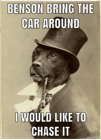 Money Dog: BENSON BRING THE  CAR AROUND  WOULD LIKE TO  CHASE IT  mematic no