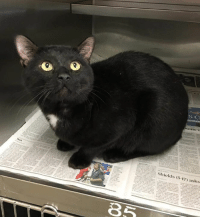 This super sweet guy has been at Clayton AC since Oct 4th!  We only found out yesterday.  Luckily he has rescue interest but it will cost money to vet him! He's developed a URI and needs immediate vet care.  We need to raise at least $125 on him.  Pls pls pledge for Kingston.: BER  ields 5-17) asks This super sweet guy has been at Clayton AC since Oct 4th!  We only found out yesterday.  Luckily he has rescue interest but it will cost money to vet him! He's developed a URI and needs immediate vet care.  We need to raise at least $125 on him.  Pls pls pledge for Kingston.