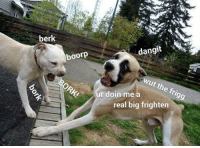 Dogs, Big, and Real: berk  dangit  boorp  Wut the frigg  ORKI  r doin me a  real big frighten Fan subbbbs are the besst