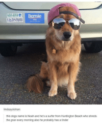 Dank, Tinder, and Noah: Bernie  MOTHER  You Think Education  lindsay olohan:  this dogs name is Noah and he's a surfer from Huntington Beach who shreds  the gnar every morning also he probably has a tinder