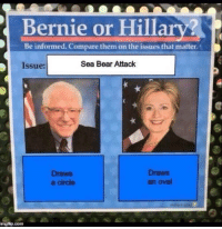 Funny, Too Much, and Bear: Bernie or Hillary?  Be informed. Compare them on the issues that matter.  Sea Bear Attack  Issue:  Draws  Draws  an oval  a circle  imgfip.com these are too much 😂😭