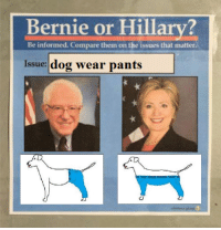 Dog Wearing Pants: Bernie or Hillary?  Be informed. Compare them on the issues that matter.  Issue:  dog wear pants