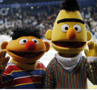 "Friends, Life, and Memes: ""Bert and Ernie are best friends... they do not have a sexual orientation."" The long-running debate about whether Sesame Street's co-habiting duo are gay has been reopened again, after one of the show's writers suggested the puppets' partnership is based on a real-life same-sex relationship. Tap the link in our bio👆🏽to read what Mark Saltzman had to say about the inspiration behind the pair, and the response from creators Sesame Workshop. 📷: Moritz Winde-Bongarts-Getty sesamestreet puppets loveislove lgbtq instagay bbcnews"