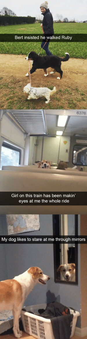 animalsnaps:Animal snaps: Bert insisted he walked Ruby   6376  EMERGENCY  Girl on this train has been makin'  eyes at me the whole ride   My dog likes to stare at me through mirrors animalsnaps:Animal snaps