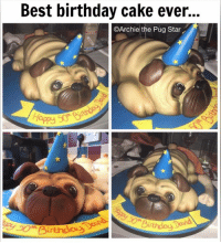 Memes, Cake, and Pugs: Best birthday cake ever...  CArchie the Pug Star  Birthdoy Is this not the best cake ever...😀😀😀