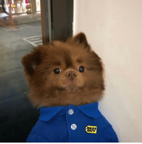I will buy anything and everything from this Best Buy sales rep 📷: @bertiebertthepom: BEST  BU I will buy anything and everything from this Best Buy sales rep 📷: @bertiebertthepom