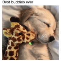 (@doggosdoingthings) posts delightful puppers that make me happy. (📷: Reddit u-tkmj75): Best buddies ever (@doggosdoingthings) posts delightful puppers that make me happy. (📷: Reddit u-tkmj75)