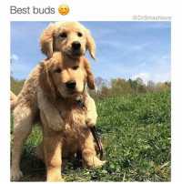"""Bored, Memes, and Smashing: Best buds  @DrSmashlove Me and my besfren AF. Piggyback rides is normal. Spanking upon the cheek portions of the ass is normal. He also, at times, kisses me all over my head and face when he sees me which gives me the heebie jeebies TBH but I allow it because that's besfren. Comment below the coziest thing u and your besfren do. Don't be shy I know u ladies read my shit and were like """"HAHAHA THAT'S PG RATED SMASH - I WENT DOWN ON MY BESFREN ON NEW YEAR'S EVE BECAUSE WE WERE HIGH AND BORED LOL."""" Well go head besfrens I think y'all might now be lesfrens but I don't put labels on things - I'm label-fluid 🤗. If that's your besfren that's your besfren. Here's to 2017 being the best year ever. Let's all toast to our besfrens. We lucky to have them 😍😂😂😂"""