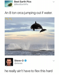 I can't even get out my bed 😳 • Follow @savagememesss for more posts daily: Best Earth Pics  @BestEarthPix  An 8 ton orca jumping out if water.  Steve-O  @steveo  he really ain't have to flex this hard I can't even get out my bed 😳 • Follow @savagememesss for more posts daily