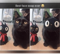 21 Cute and Funny Animal Memes #memes #humor #funny #funnymemes: Best face swap ever  0 21 Cute and Funny Animal Memes #memes #humor #funny #funnymemes