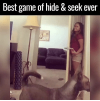 Dank, Dogs, and Idiot: Best game of hide & Seek ever This dog is a total idiot 😂😂