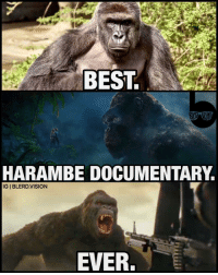 Godzilla, Memes, and Vision: BEST  HARAMBE DOCUMENTARY  IGI BLERD.VISION  EVER. Man, they made that Harambe movie fast... 🤔 DicksOutForHarambe 2017. 🙌🏾 Bonus points for the special guest star appearances from Loki, Nick Fury and the Nova Corps. -- kingkong kongskullisland kong godzilla harambe kaiju shingodzilla pacificrim kingofthemonsters tomhiddleston loki avengers firstlook geek news jurassicworld toho kingkongvsgodzilla letthemfight