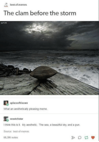 Beautiful, Meme, and Memes: best-of memes  The clam before the storm  7195  aplaceofhisown  What an aesthetically pleasing meme.  sneetchstar  think this is it. My aesthetic. The sea. a beautiful sky and a pun.  Source: best-ofmemes  68,386 notes Keep clam.  --Wolverine