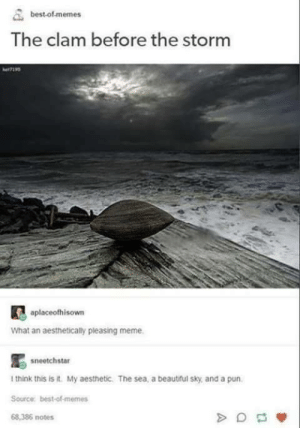 Aesthetic Meme.: best of memes  The clam before the storm  aplaceofhisown  what an aestheticaly pleasing meme  sneetchstar  I think this is it. My aesthetic. The sea, a beautiful sky, and a pun  Source best-of-memes  68,386 notes Aesthetic Meme.