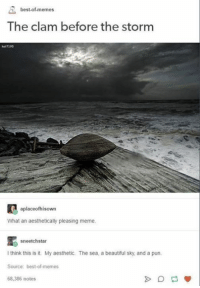 Beautiful, Meme, and Memes: best-of-memes  The clam before the storm  kat7195  aplaceofhisown  What an aesthetically pleasing meme  sneetchstar  I think this is it. My aesthetic. The sea, a beautiful sky, and a pun.  Source: best-of-memes  68,386 notes