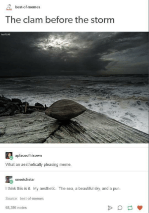 Beautiful, Meme, and Memes: best-of-memes  The clam before the Storm  kat7195  aplaceofhisown  What an aesthetically pleasing meme.  sneetchstar  I think this is it. My aesthetic. The sea, a beautiful sky, and a pun.  Source: best-of-memes  68,386 notes the clam before the storm