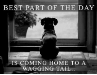 So true!: BEST PART OF THE DAY  IS COMING HOME TO A  WAGGING TAIL  PETDIG So true!