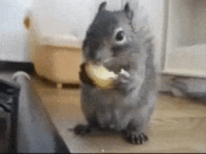 CRAZatn Blingee Crazy Squirrel Gif | Crazy Meme on ME ME