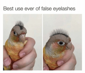 Dank, Best, and 🤖: Best use ever of false eyelashes