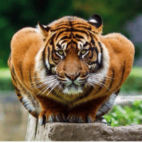Crouching Tiger!: Best Vacations Crouching Tiger!