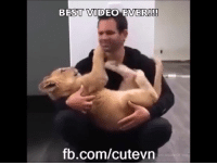 Memes, Videos, and Best: BEST VIDEO EVER!  fb.com/cutevn This video will bring a big smile in your face!! :D  by Truth Inside Of You