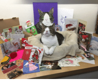 Memes, Post Office, and 🤖: BESTES  DEIN  BESTES  season's greetings  Chrismas Today I learned that the post office has been really busy! That means I just got a big pile of delayed Christmas cards and gifts! I feel so lucky 'cause I got to have an extra Christmas at the end of January 😸🎄💜 Thank you so much for all the sweet cards and PAWsome gifts. About one second after this picture was taken, I discovered a little bag of catnip that was with one of the cards and became a super energetic kitty! 😹🎉 I just reallyyy love catnip 😺 ChristmasInJanuary Woohoo LOVE ILoveCatnipAndLove