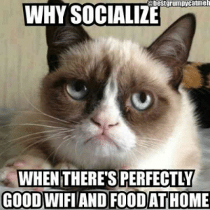 "Food, Memes, and Good: @bestgrumpycatmeh  WHY SOCIALIZE  WHEN THERE'S PERFECTLY  GOODWIFIAND FOODATHOME ""Why socialize when there's perfectly good wifi and food at home?""  #grumpycatmemes #ripgrumpycat #memes"